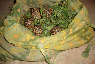To fuel the growing market for exotic pets, thousands of animals are taken from the wild and bred in captivity every day, and these animals suffer at every stage of the supply trade.