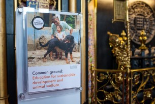 Common Ground: Education for Sustainable Development and Animal Welfare