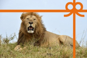 eCard: End the lion trade