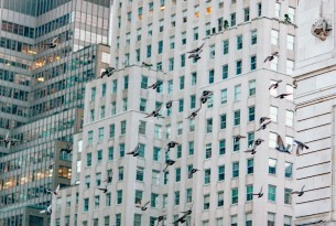 Birds in New York City