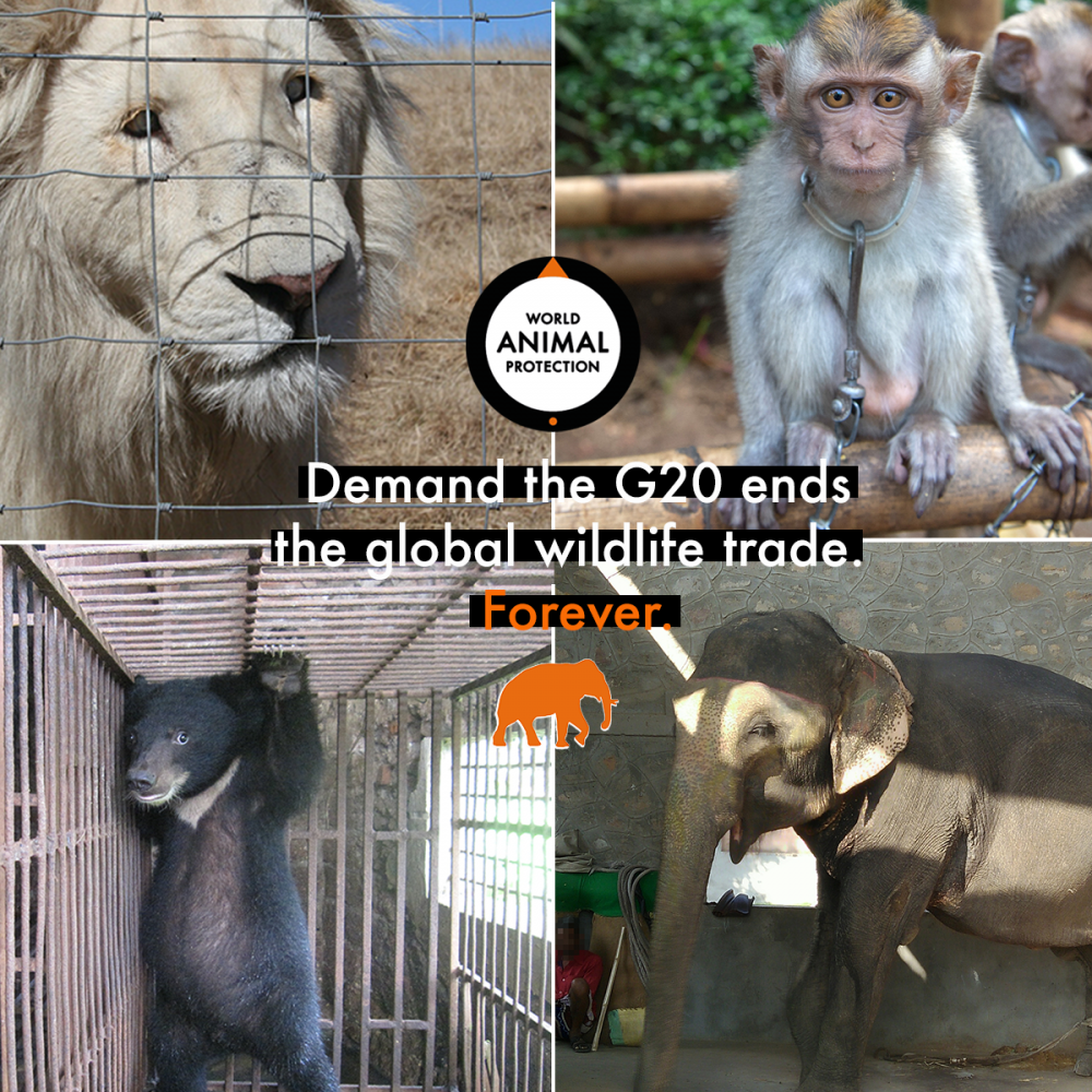 World leaders must ban the global wildlife trade for animals, people and planet
