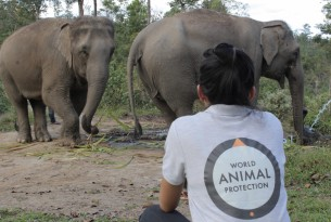 Dee Kenyon with elephants at elephant friendly venue ChangChill