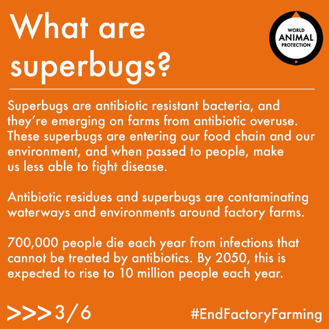 superbugs3