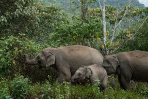 Three elephants in Thailand