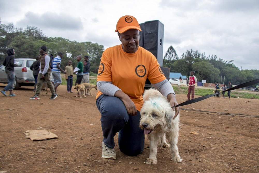 Our campaign manager Dr. Emily Mudoga with a dog at a rabies vaccination drive - World Animal Protection - Better Lives For Dogs