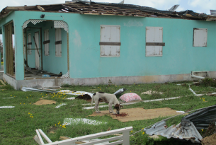 A dog in Barbuda receives emergency food after Hurricane Irma - World Animal Protection - Disaster management