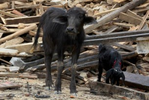 Read our animals in disaster blog