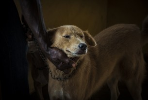 Ghana launches rabies prevention project