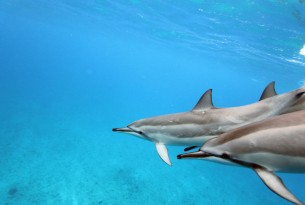 Five things you can do to save the ocean and its animals