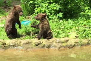 Bear and Romanian bear sanctuary
