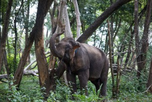 Online dating service shows love for elephants following outreach by World Animal Protection