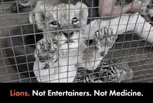 Lions. Not Entertainers. Not Medicine.