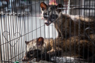 Caged civets at the Denpasar Bird Market in Bali, Indonesia - World Animal Protection