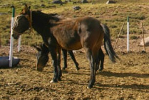 Protecting working animals