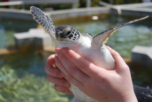 handling turtles can be stressful for the animal
