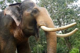 Elephant at high welfare venue in Koh Lanta, Thailand - World Animal Protection