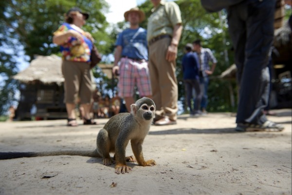 Squirrel monkey taken from the wild for cruel tourist selfies in Peru