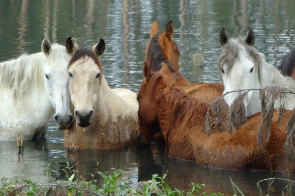 Horses left behind after flooding in Colombia before being rescued