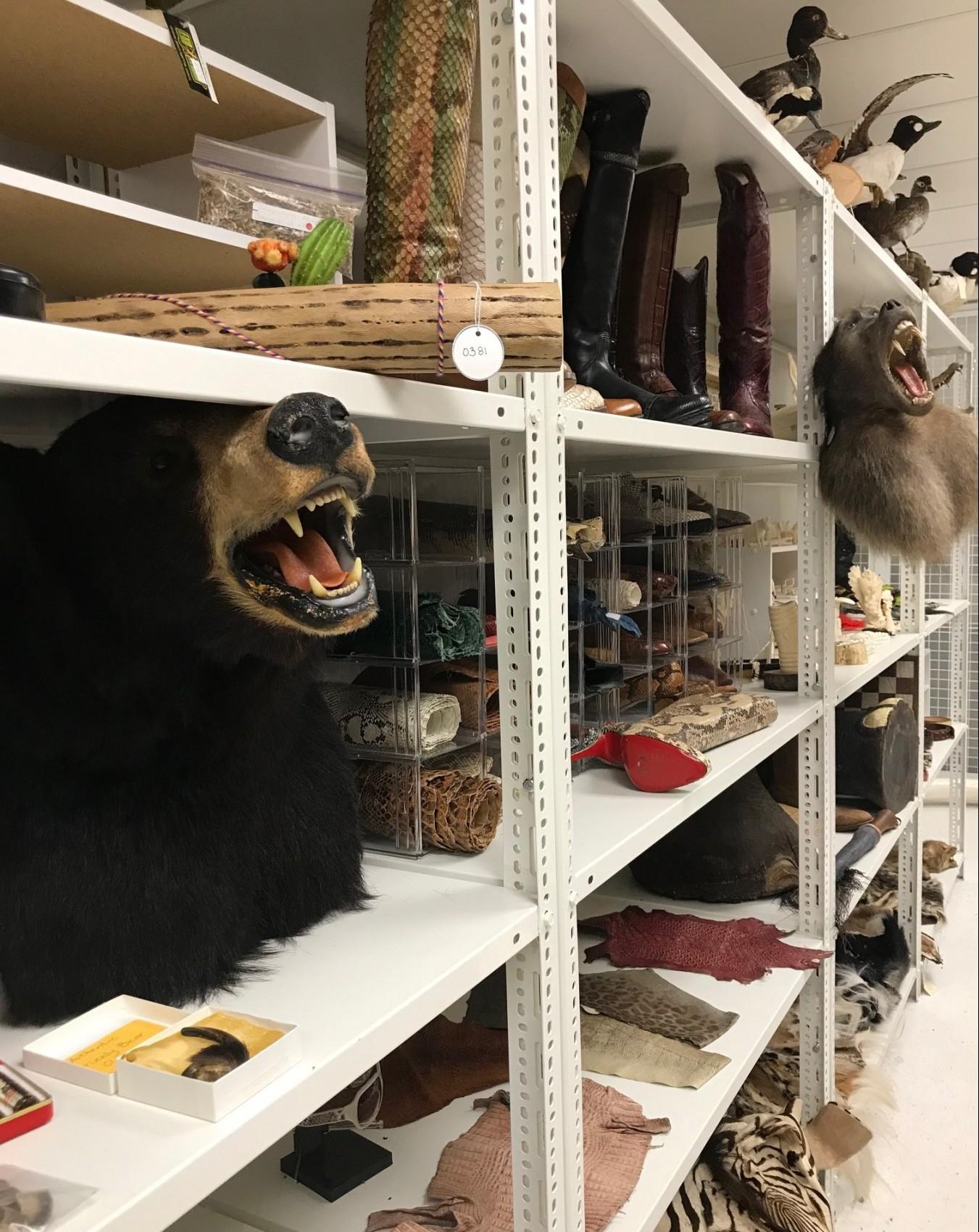 Pictured: Canada border services wildlife locker