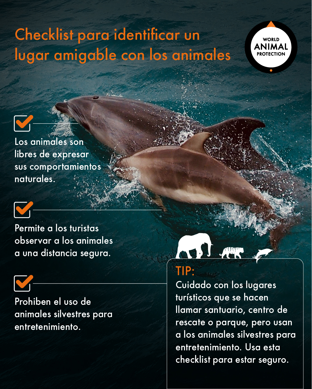 checklist lugar amigable con animales 02