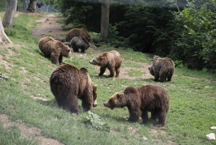 Two bears at Romania bear sanctuary - Animals in the wild - World Animal Protection
