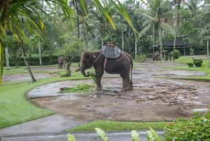 Memories of abuse: The life of an elephant in wildlife tourism