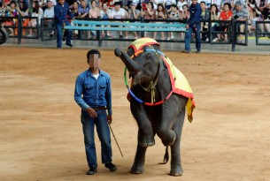 Elephant performing at Thai tourist attraction