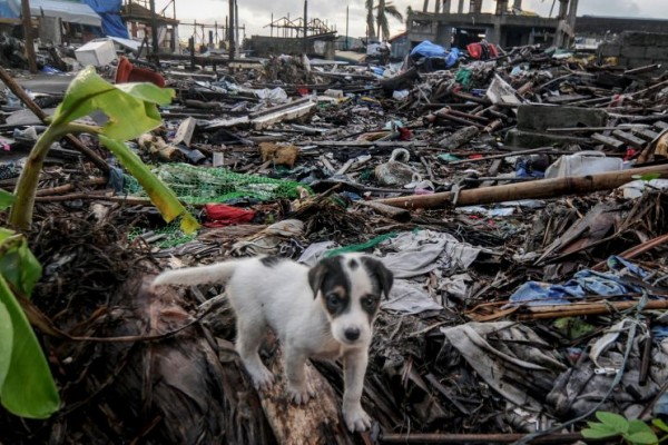 A puppy among debris of houses destroyed by Typhoon Haiyan, in the Philippines