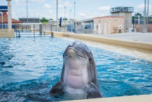 A dolphin in captivity - Wildlife. Not entertainers - World Animal Protection