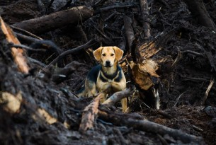 Protecting your pet from bushfires