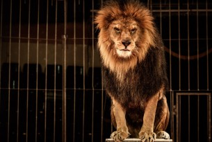 9 Facts About Animal Circuses You Should Know