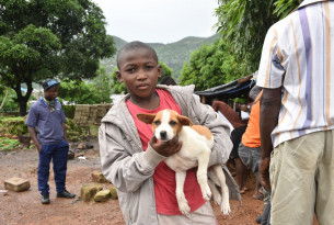 Photo from dog vaccination drive in Freetown, Sierra Leone