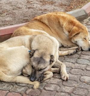 National Pet day, stray animals, coronavirus