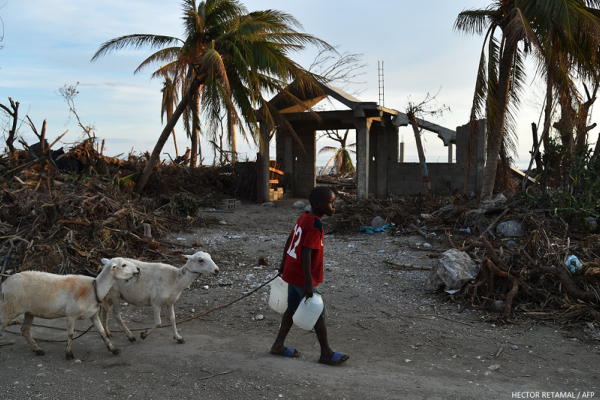What we're doing to help animals in Haiti