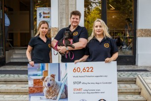 Petition handover in Romania to urge city of Constanta to end cruel culling and adopt humane dog population management - Better lives for dogs - World Animal Protection