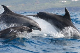 We respond to dolphin farming plans in Taiji, Japan