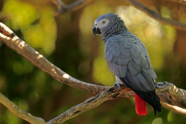 A Day In The Life Of A Poached Parrot World Animal Protection