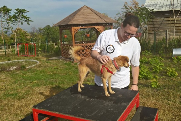 A member of staff with a dog at a Romanian vet clinic partially funded by World Animal Protection