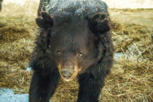 Together we're celebrating another momentous year for bears in Pakistan