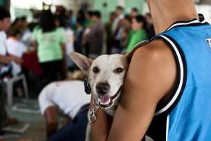 Ending inhumane dog culling
