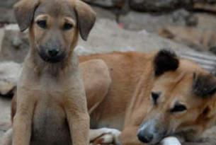 Stray dog population management
