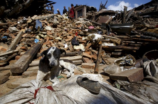 A dog sits in front of a mound of rubble of collapsed houses after Saturday's earthquake in Bhaktapur, Nepal April 27, 2015