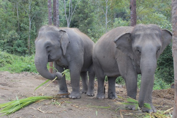 Elephant being crowded