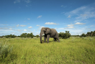 An elephant in Chobe National Park, Botswana