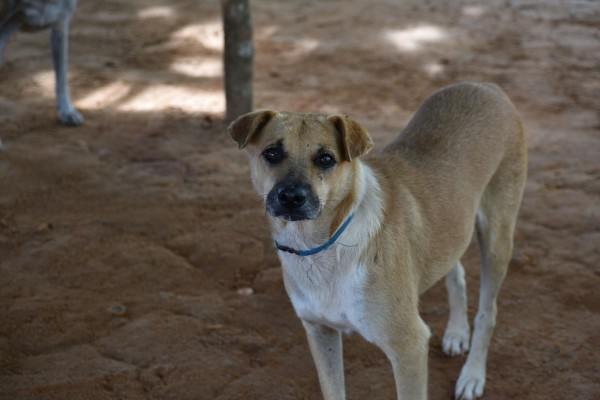 A community dog in Freetown, Sierra Leone