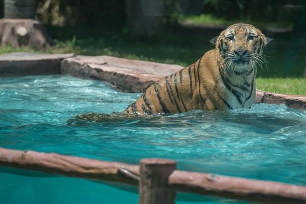 Tiger torture: It's time to end the show