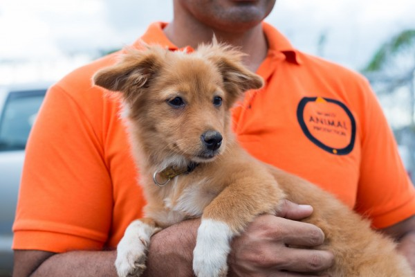 World Animal Protection member of staff holding a dog - World Animal Protection