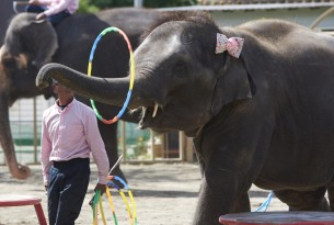 Elephant Entertainer