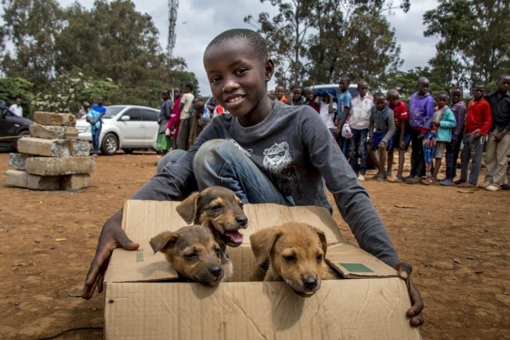 A young boy brings his tiny friends to get vaccinated.