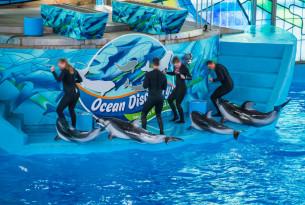 Golfinhos sendo usados durante atra??o de entretenimento - Animais silvestres, n?o entretenimento.
